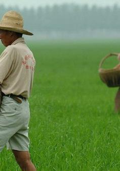 Dịch COVID-19 không ảnh hưởng nhiều đến thị trường nông sản Trung Quốc