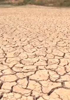Đăk Lăk: Hàng nghìn ha cây trồng bị khô hạn
