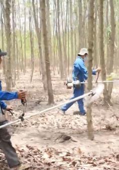 Chi bộ nhà máy Tân Mai - Chi bộ 45 năm giữ rừng