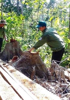 Yêu cầu điều tra nghiêm vụ lâm tặc ngang nhiên mở đường vào phá rừng tại Phú Yên
