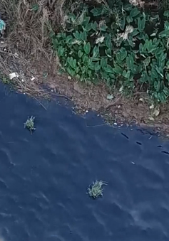 """""""Đầu độc"""" sông Hồng bởi nước thải làng nghề dệt nhuộm"""
