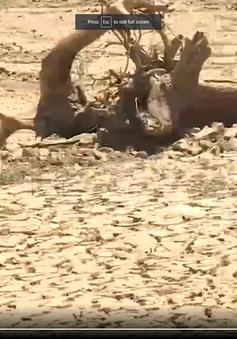 Nam Trung Bộ ứng phó với khô hạn lịch sử