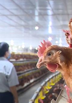 Nông dân tìm cách tiêu thụ sản phẩm trong dịch bệnh