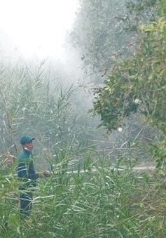 Cà Mau nỗ lực giữ rừng trong mùa khô hạn