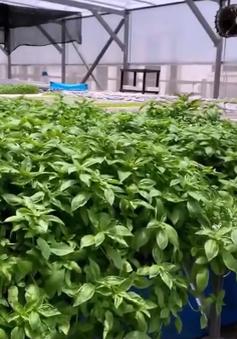 Đấu giá nóc nhà đỗ xe để… trồng rau