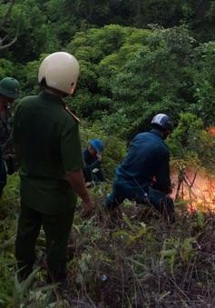 Xử lý nghiêm đối tượng làm cháy rừng