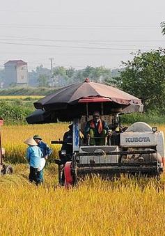 ĐBSCL hưởng lợi khi miễn thuế đất nông nghiệp