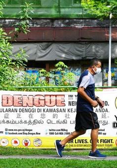 Sốt xuất huyết tại Singapore tăng vọt lên hơn 10.000 ca