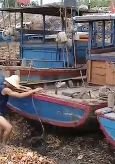"""Cảng cá Tân Sơn bị  lục bình """"bủa vây"""""""