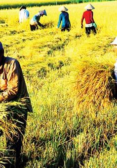 Nông nghiệp quyết giữ mục tiêu tăng trưởng năm 2020