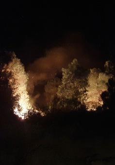 Dập tắt đám cháy rừng ở núi Con Voi (Nghệ An)
