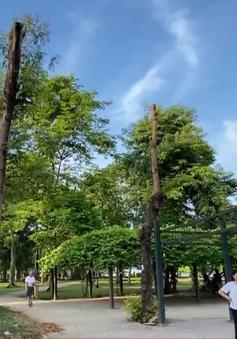 Cây xanh công viên Thống Nhất bị cắt cụt giữa trời nắng gắt: Người dân xót xa