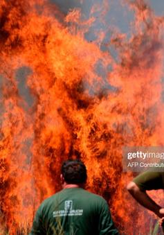 160ha rừng bị thiêu rụi tại Tây Ban Nha