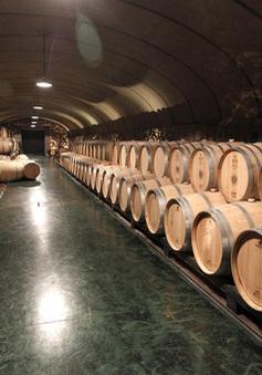 """Khủng hoảng COVID-19 """"châm ngòi"""" cho cuộc chiến trong ngành sản xuất rượu vang Pháp"""
