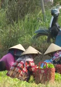 Nắng hạn, người nông dân phải lấy tiền bán rau bù tiền điện