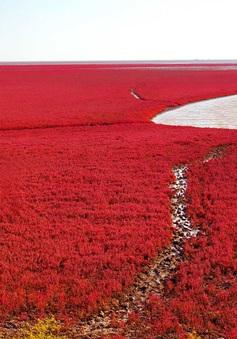"""Ngất ngây, vẻ đẹp mê hoặc du khách của vùng """"biển đỏ"""" (Trung Quốc)"""