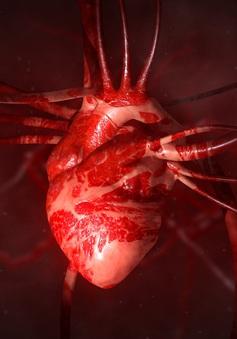 Nghiên cứu của Mỹ: Virus SARS-CoV-2 có thể xâm nhập vào tim?