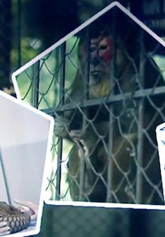 Khi lâm tặc trở thành... người bảo vệ động vật hoang dã
