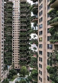 """""""Thiên đường"""" sinh thái đô thị bị bỏ hoang vì nhiều muỗi"""