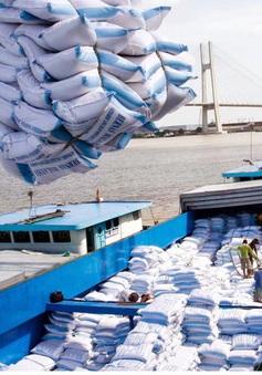 Gạo Việt tiếp tục bức tốc tiến vào EU nhờ EVFTA