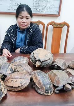 Phát hiện, thu giữ 15 cá thể rùa không có giấy tờ, chứng minh nguồn gốc