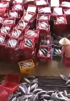 Khánh Hòa: Chuyến biển xuyên Tết giúp ngư dân vượt qua khó khăn