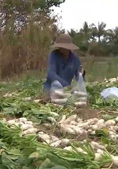 Học sinh sáng chế máy rửa rau củ tại ruộng