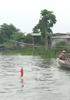 Nghề săn cá cơm trên sông Hậu