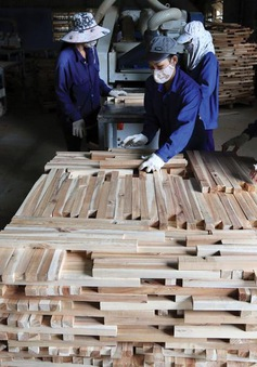 Xuất khẩu gỗ vẫn tăng 16% trong bối cảnh COVID-19