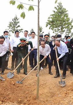 Đề án 1 tỷ cây xanh - Vì một Việt Nam xanh