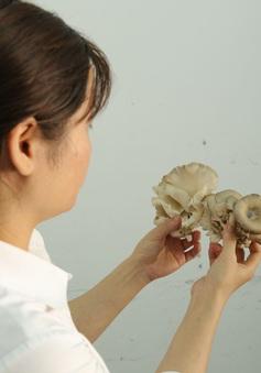 Cảnh báo nguy cơ ngộ độc do nấm