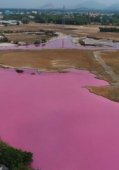 Phạt 372 triệu đồng công ty xả thải làm hồ nước đổi sang màu hồng tím