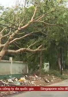 Nguy cơ tai nạn do cây ngã, đổ