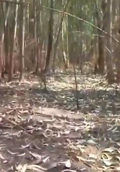 Đồng Tháp: Nguy cơ cháy rừng trong mùa hanh khô