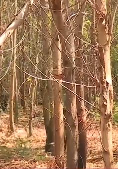 Đắk Lắk: Triển khai nhiều biện pháp phòng cháy, chữa cháy rừng