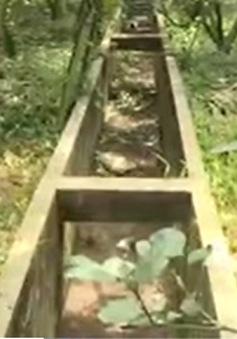 Cù lao đầu nguồn sông Tiền lại thiếu nước ngọt