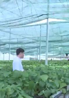 Lâm Đồng: Xử lý tình trạng xây nhà trên đất lâm nghiệp