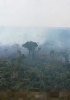 Diện tích rừng Amazon bị phá trong tháng 4 cao kỷ lục