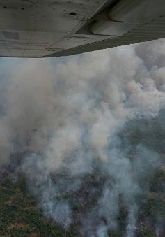 Rừng nhiệt đới Amazon thải ra nhiều khí nhà kính hơn lượng hấp thụ