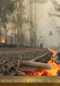 Châu Âu hỗ trợ Cộng hòa Síp đối phó cháy rừng nghiêm trọng nhất trong lịch sử