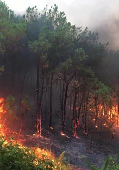 Gần 1 tháng không mưa, Hà Tĩnh nguy cơ cháy rừng mùa nắng nóng