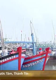 Bình Định đầu tư hơn 100 tỉ đồng nâng cấp cảng cá Tam Quan