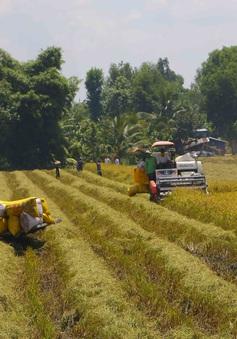 Đáp ứng đủ, kịp thời vốn cho thu mua tạm trữ thóc, gạo