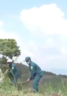 Kon Tum đẩy mạnh phong trào trồng phát triển rừng