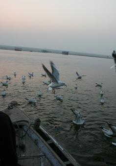 Cảm nhận sông Hằng