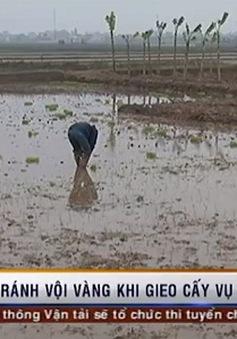 Thời tiết khắc nghiệt, tránh vội vàng khi gieo cấy vụ Đông Xuân