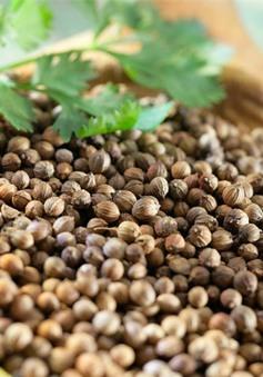 Thực hư tác dụng của hạt mùi với bệnh sởi