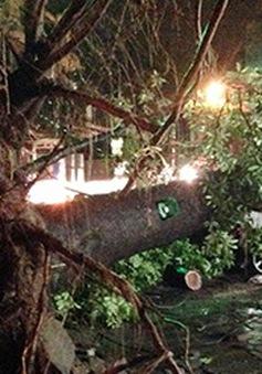 Hà Nội: Mưa giông khiến 2 người chết, 1 người mất tích