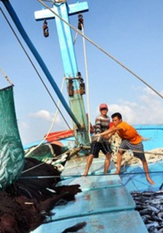 Hỗ trợ 70% phí bảo hiểm cho tàu đánh bắt xa bờ