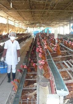 Doanh nghiệp Việt đua nhau chuyển hướng đầu tư vào nông nghiệp